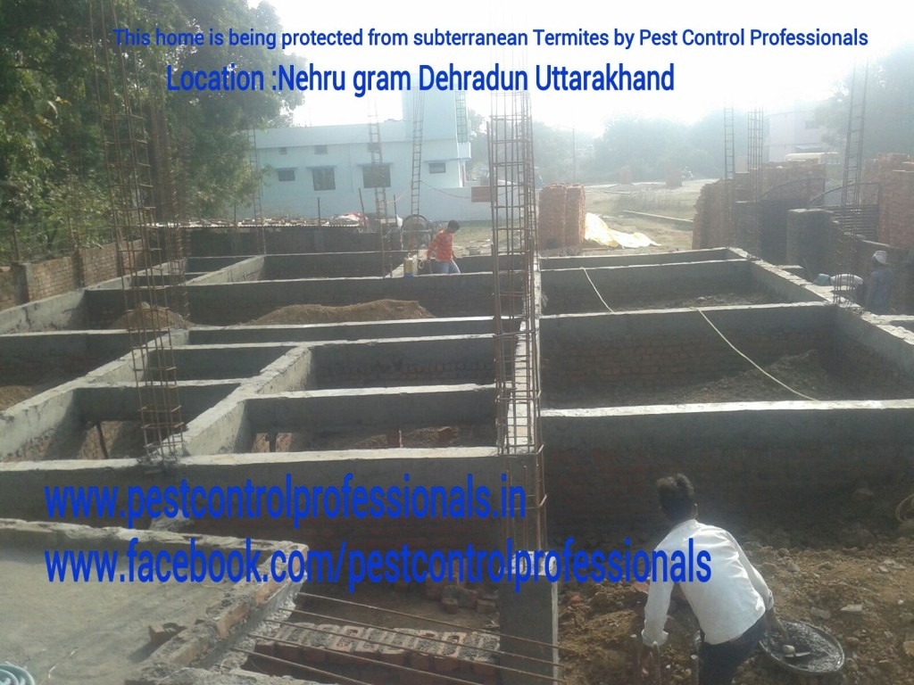 pest-control-service-pre-construction-by-ajay-sharma-dehradun.jpg
